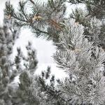 Zimą malowane 2017 Natalia Węgrzyn II miejsce