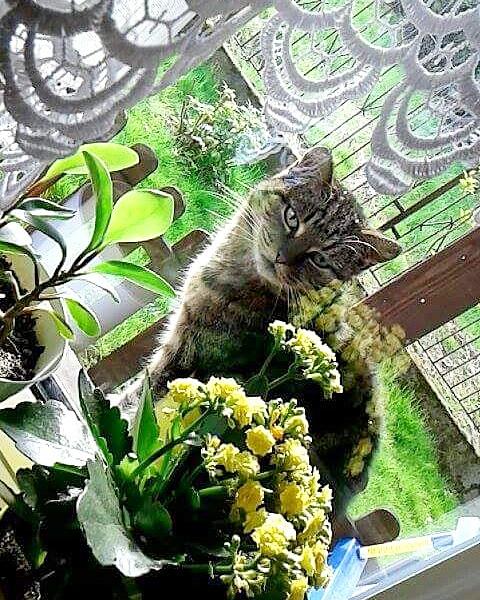 III miejsce w konkursie: Przyroda w kolorach - świat kotów dużych i małych 2017